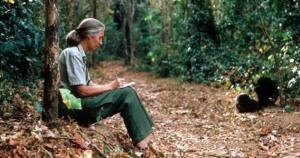 Jane Goodall humbly and against the scientific consensus observing chimpanzees in Tanzania 1987