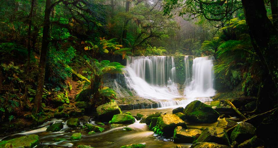 Beautiful bing skeptical swedish scientists for Australian rainforest