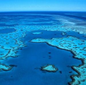 Silurian Coral Seas