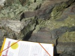 Green Pyroxene formed when oceanic crust descended under continental crust