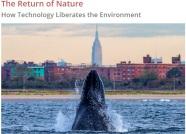Nature rebounding across the globe
