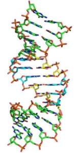 DNA - now with 6 bases - GCAT plus P and Z