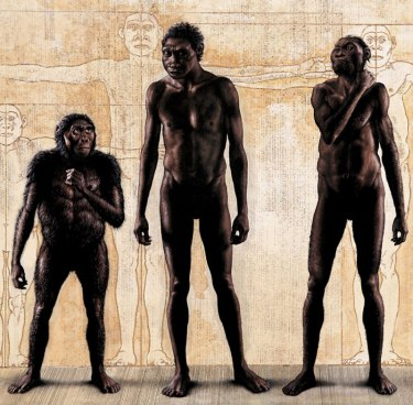 Homo naledi (right) with (left) Lucy (Homo habilis) and Homo erectus