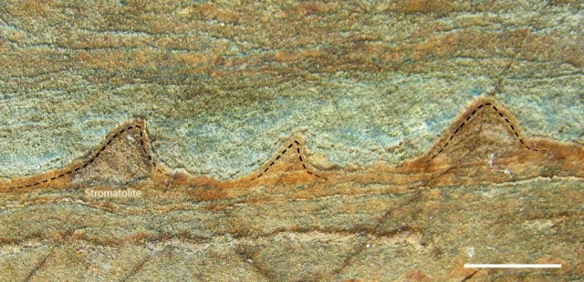 Earliest Life - 3.7 billion year old stromatolites ... or not